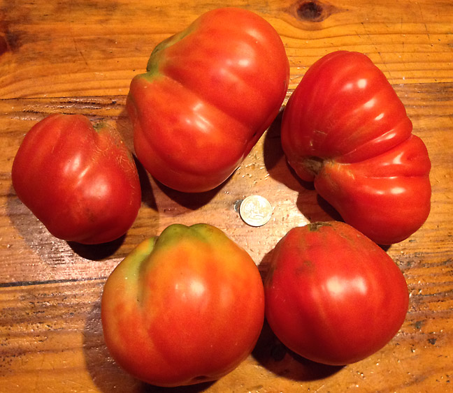 franchi red pear tomato