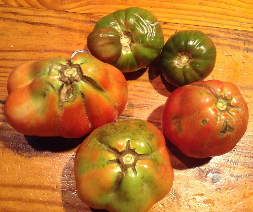 tomato top comparison